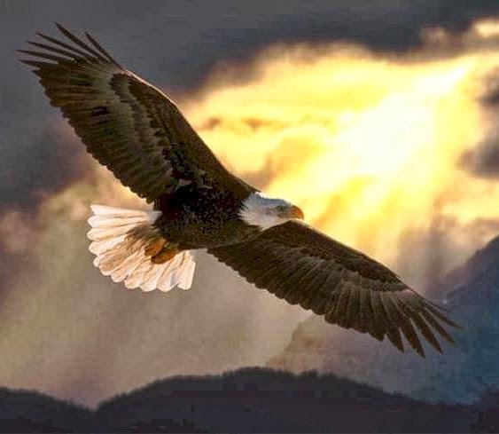 Soaring eagle online gambling gambling cheap las vegas